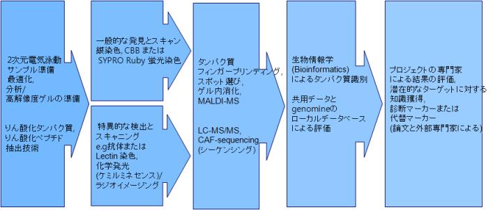 タンパク質分析サービス
